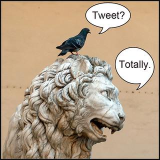 company_twitter_account